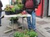 village_fair_street_market_corofin_13